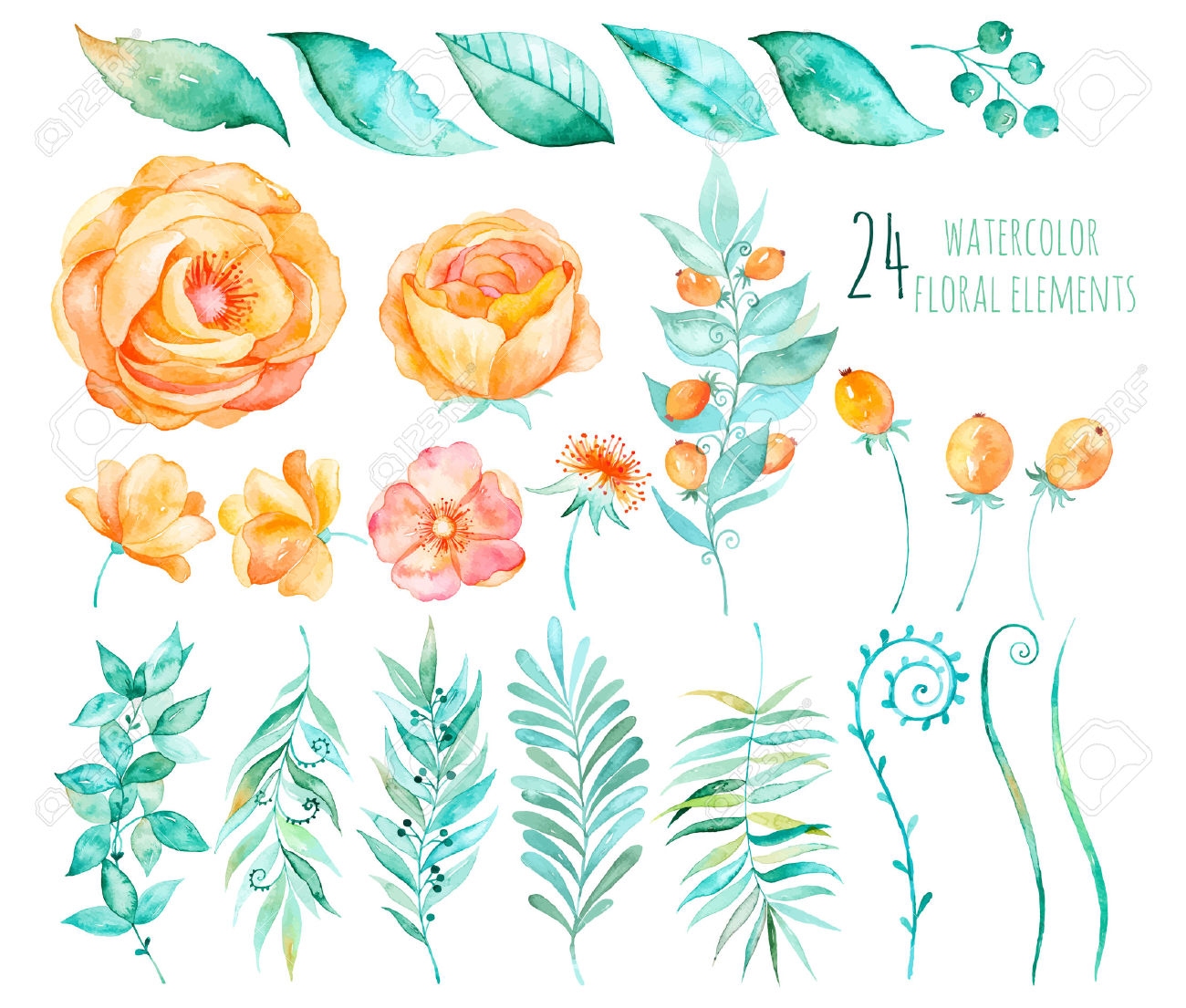 Colorful Floral Collection With Roses, Leaves, Berries, Branches.