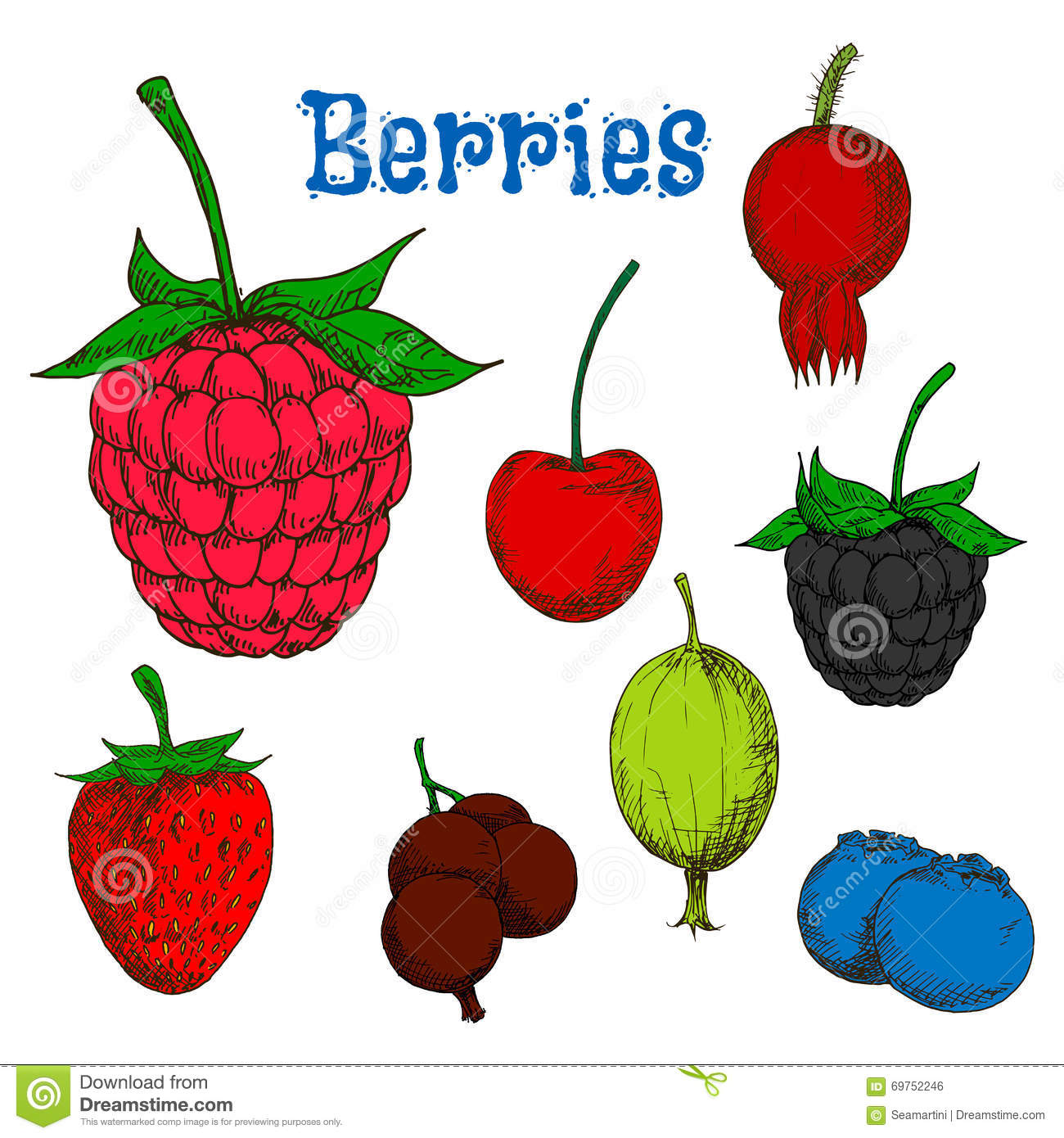 Ripe Colorful Berry Fruits Sketches Stock Vector.