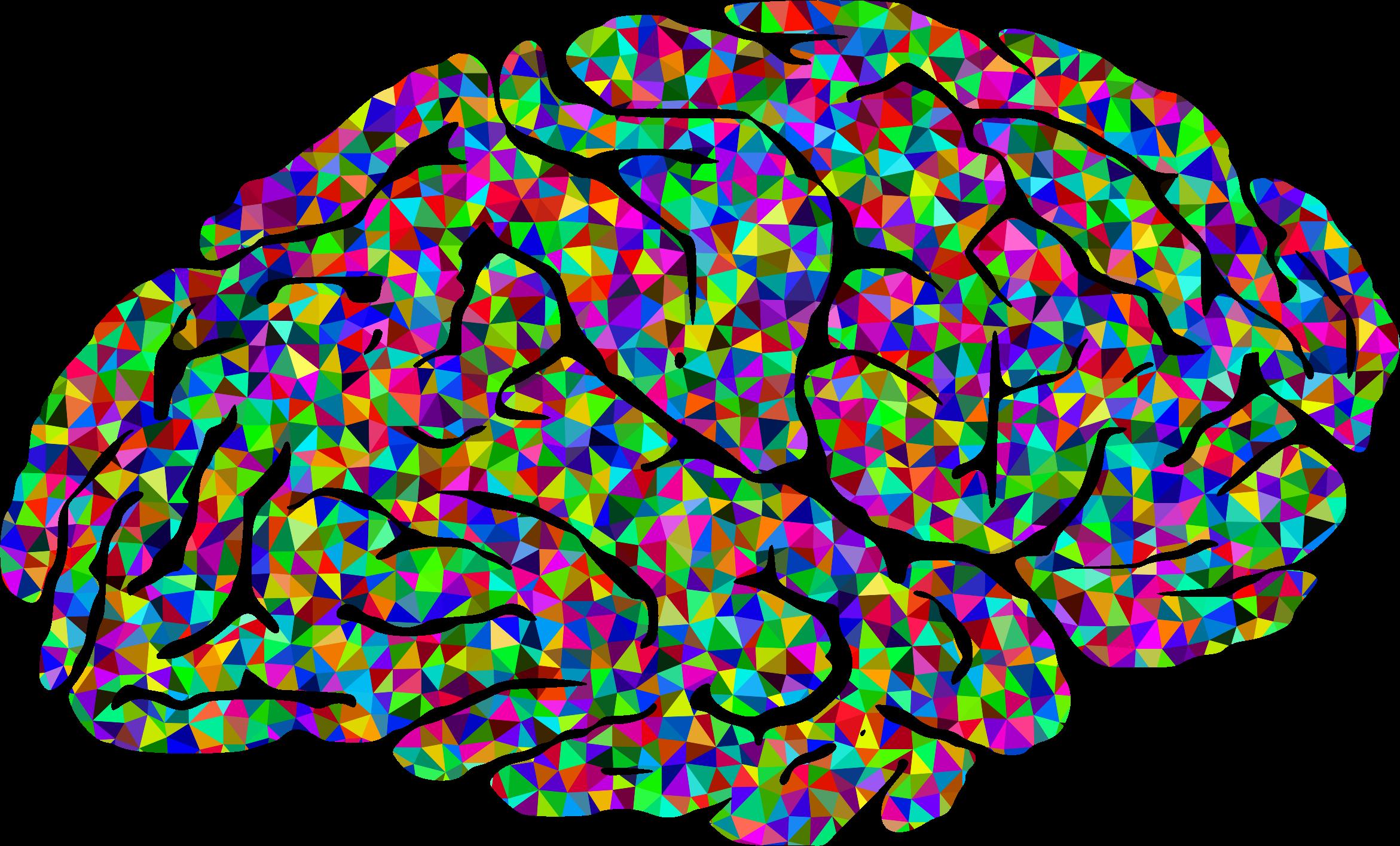 Human brain Color Clip art.