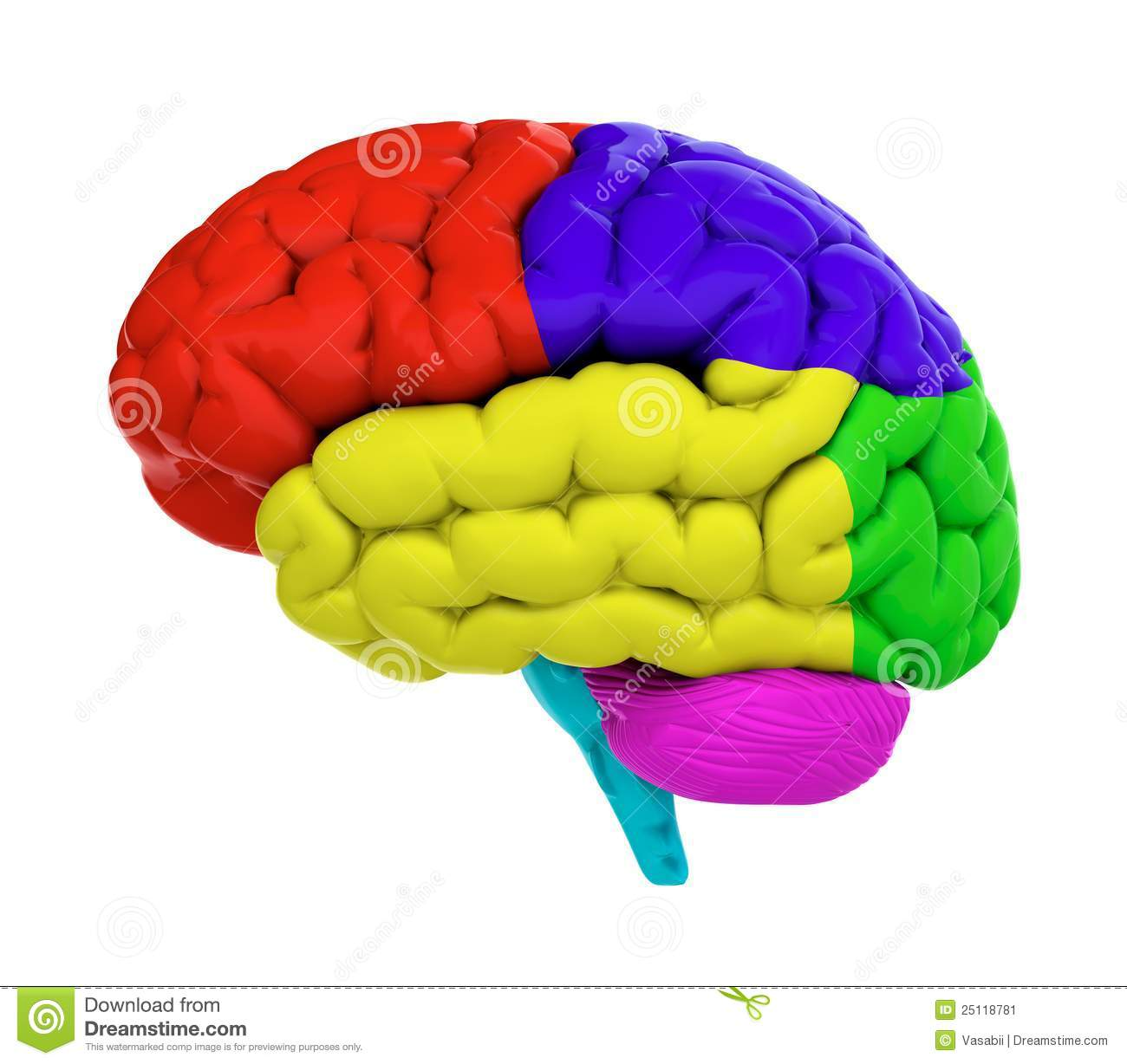 Brain Clipart Colored.