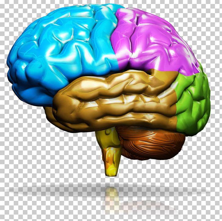 Human Brain The Neverland PNG, Clipart, Brain, Cartoon.