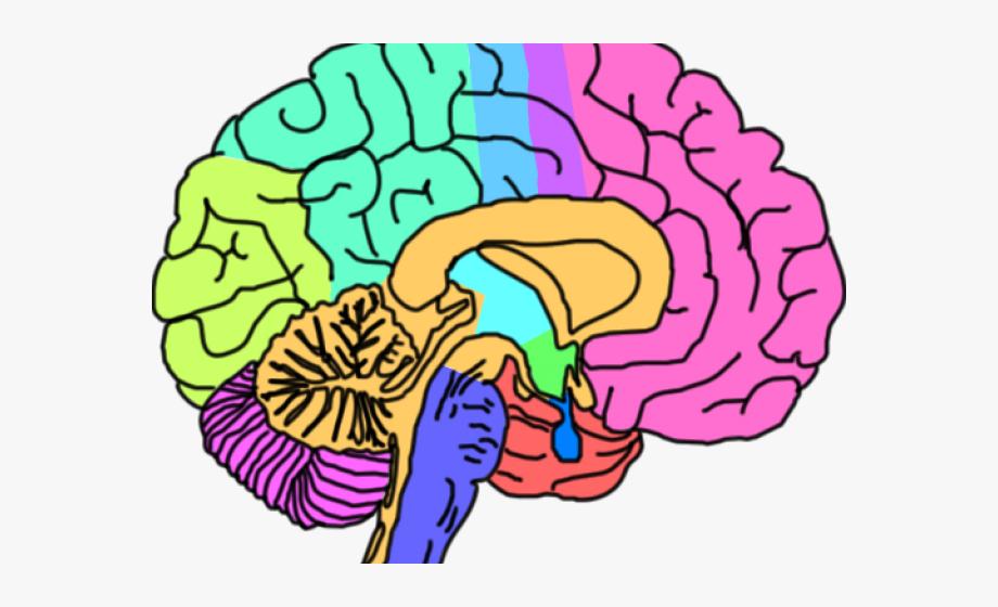 Rock Clipart Brain.
