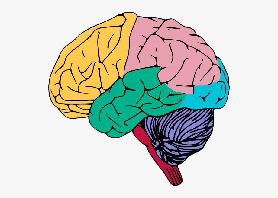 Free Colorful Brain Clip Art.