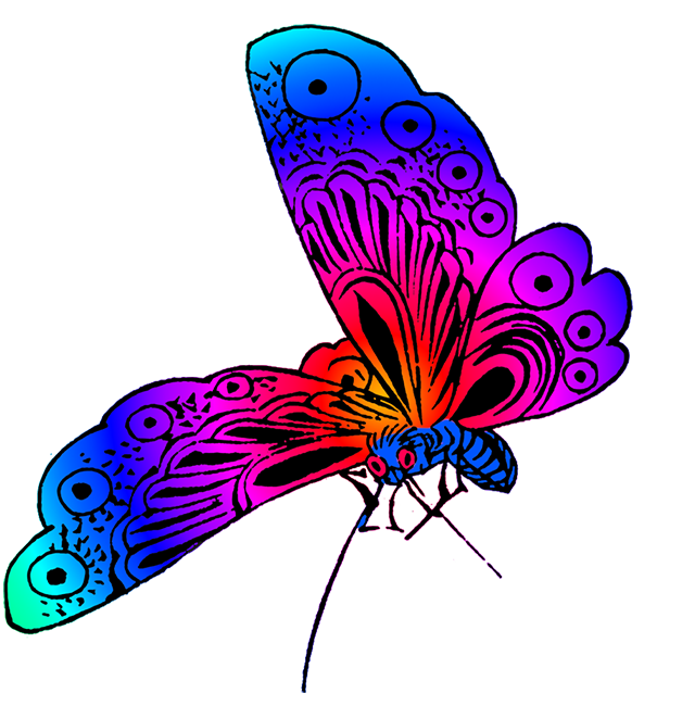 Beautiful butterfly images.