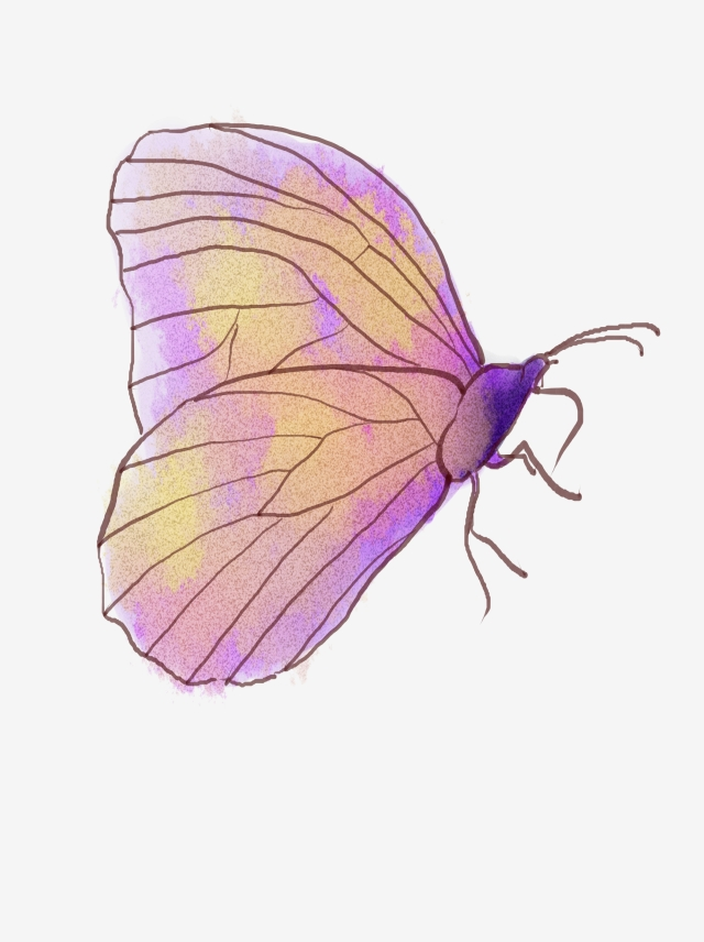 Colorful Butterfly, Butterfly Clipart, Cartoon, Colourful PNG Image.