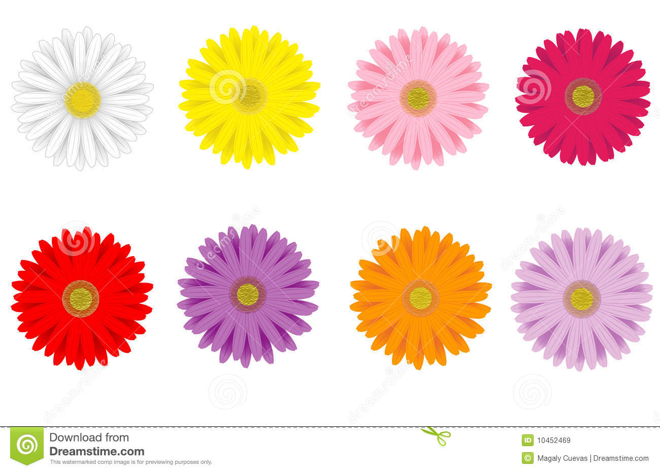 Daisies Stock Illustrations.