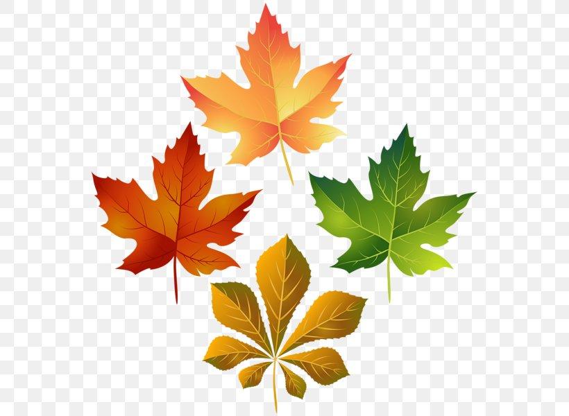 Clip Art Image Transparency Leaf, PNG, 564x600px, Leaf, Art.