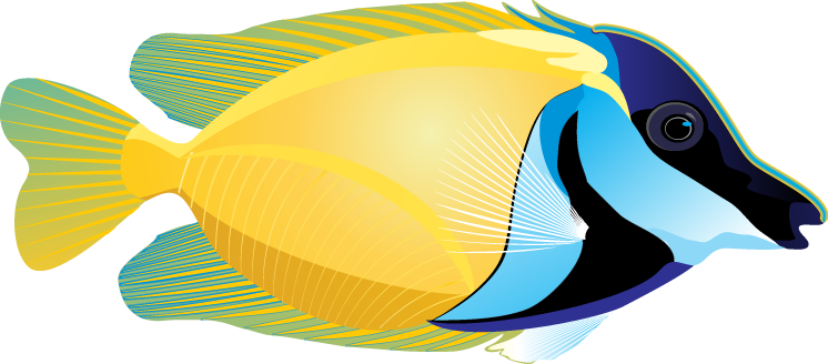 Colorful tropical fish clipart.
