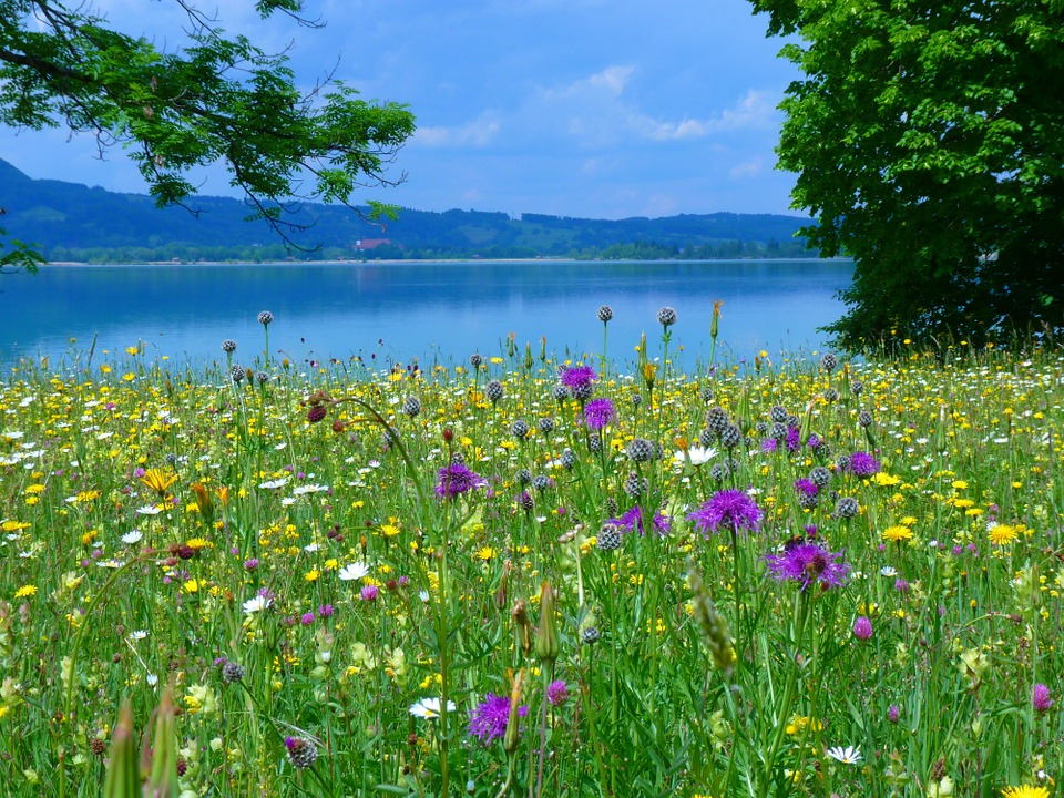 Free photo: Meadow, Flowers, Bloom.