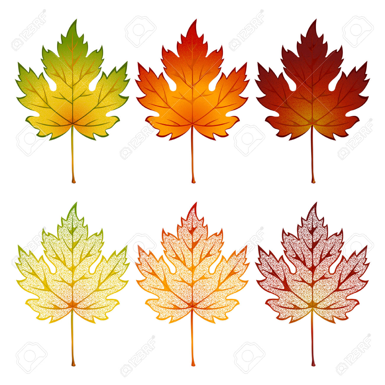 Set Of Maple Leaves Of Various Colors Royalty Free Cliparts.