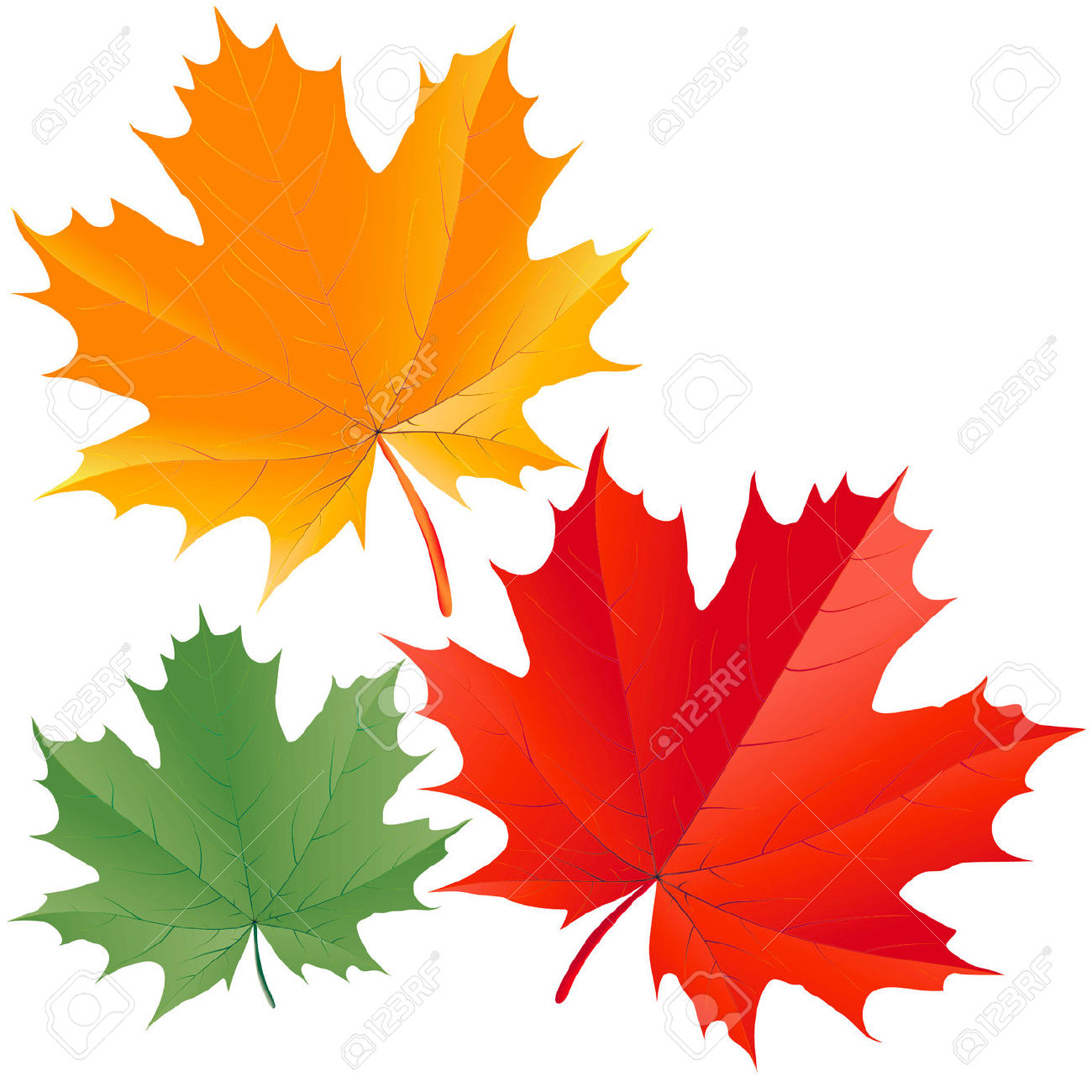 Colorful Maple Leaves Royalty Free Cliparts, Vectors, And Stock.