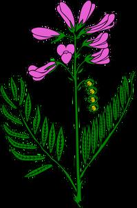 Milkweed Clipart.
