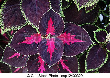 Stock Photo of Colorful nettle flower leaves.