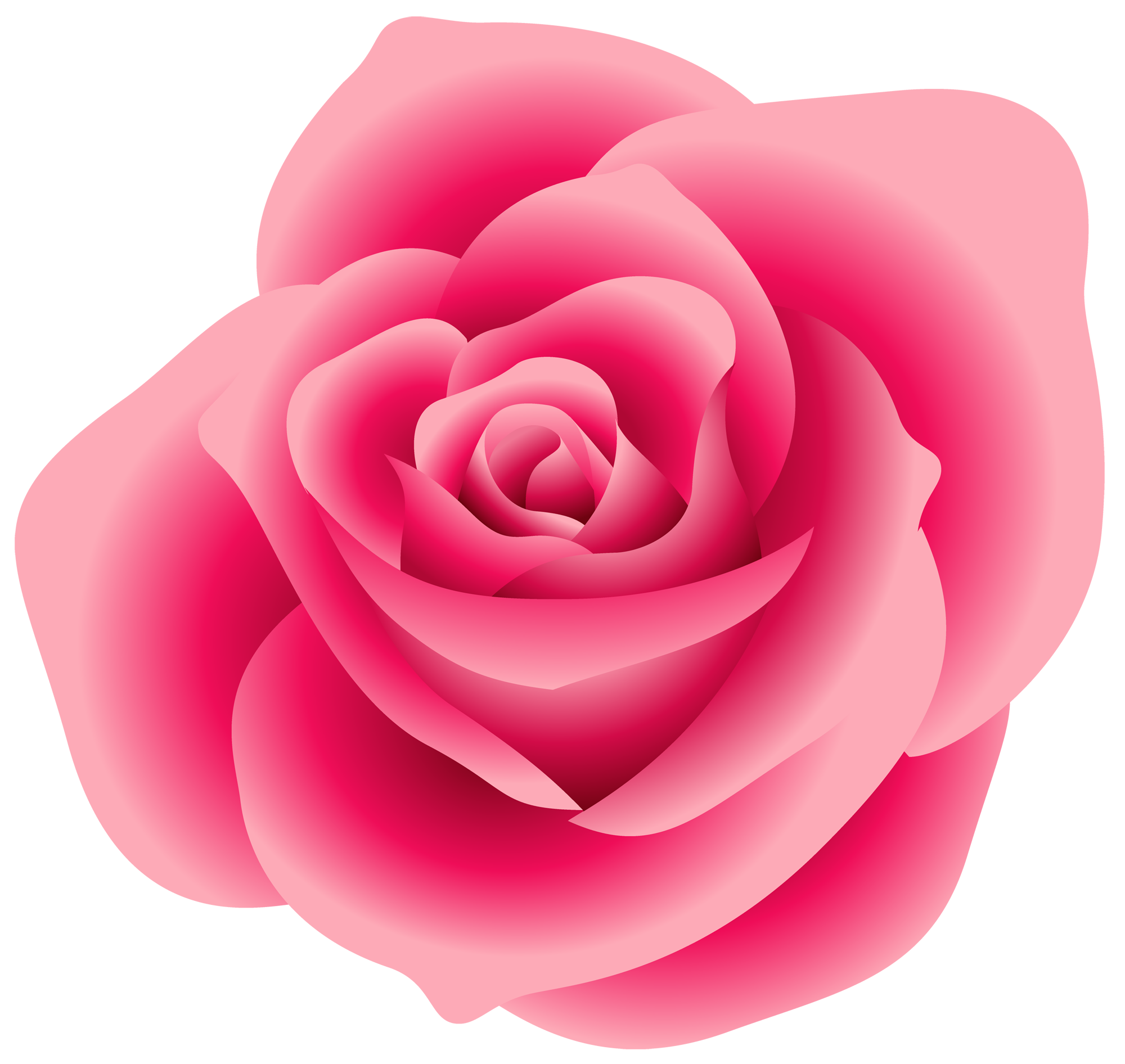 Pink color rose clipart.