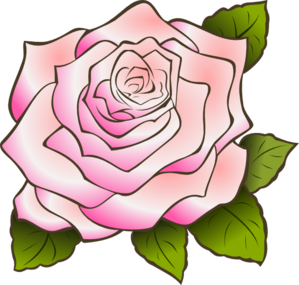 Pink rose clipart png.