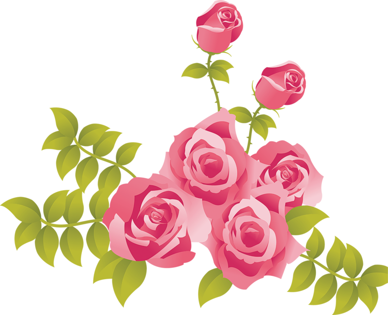 Pink roses clipart.