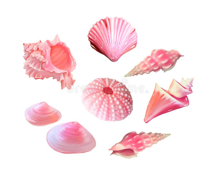 Seashells Stock Illustrations.