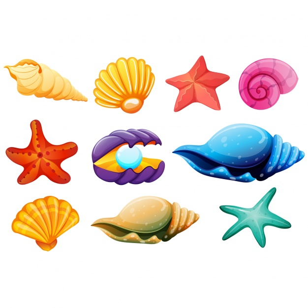 271 Seashells free clipart.