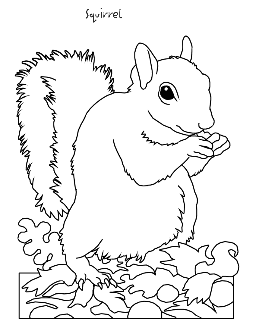 squirrel coloring page clipart - Clipground