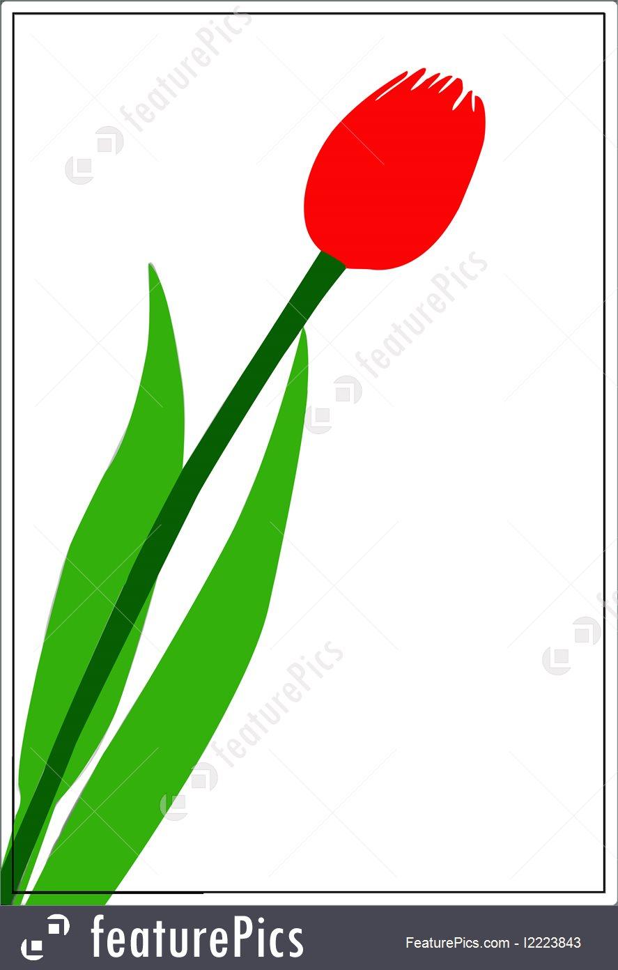Flowers: Tulip Bud Colourised.