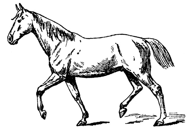 Horse black colt clipart.