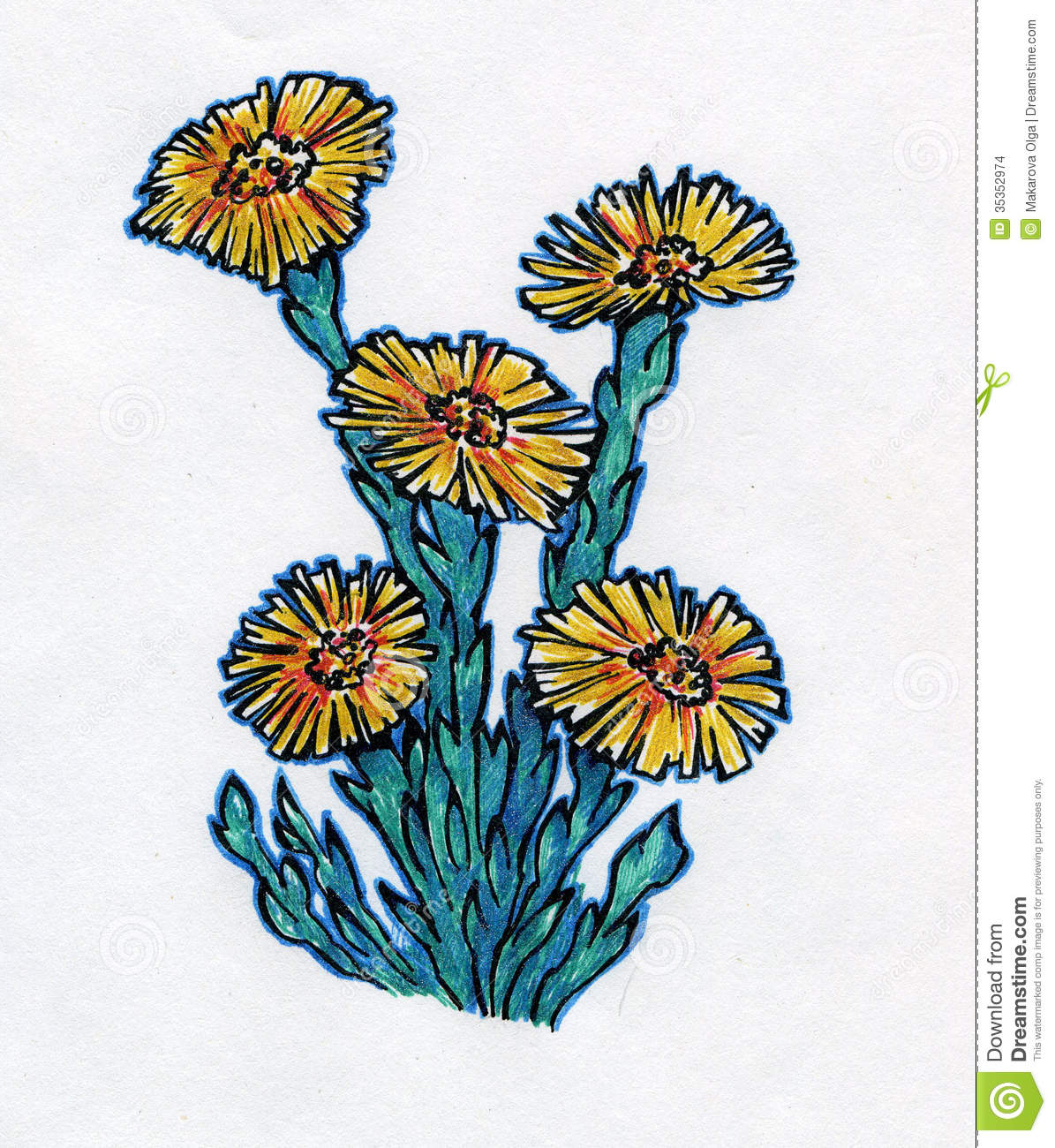 Blossoming Coltsfoot Plant Stock Images.