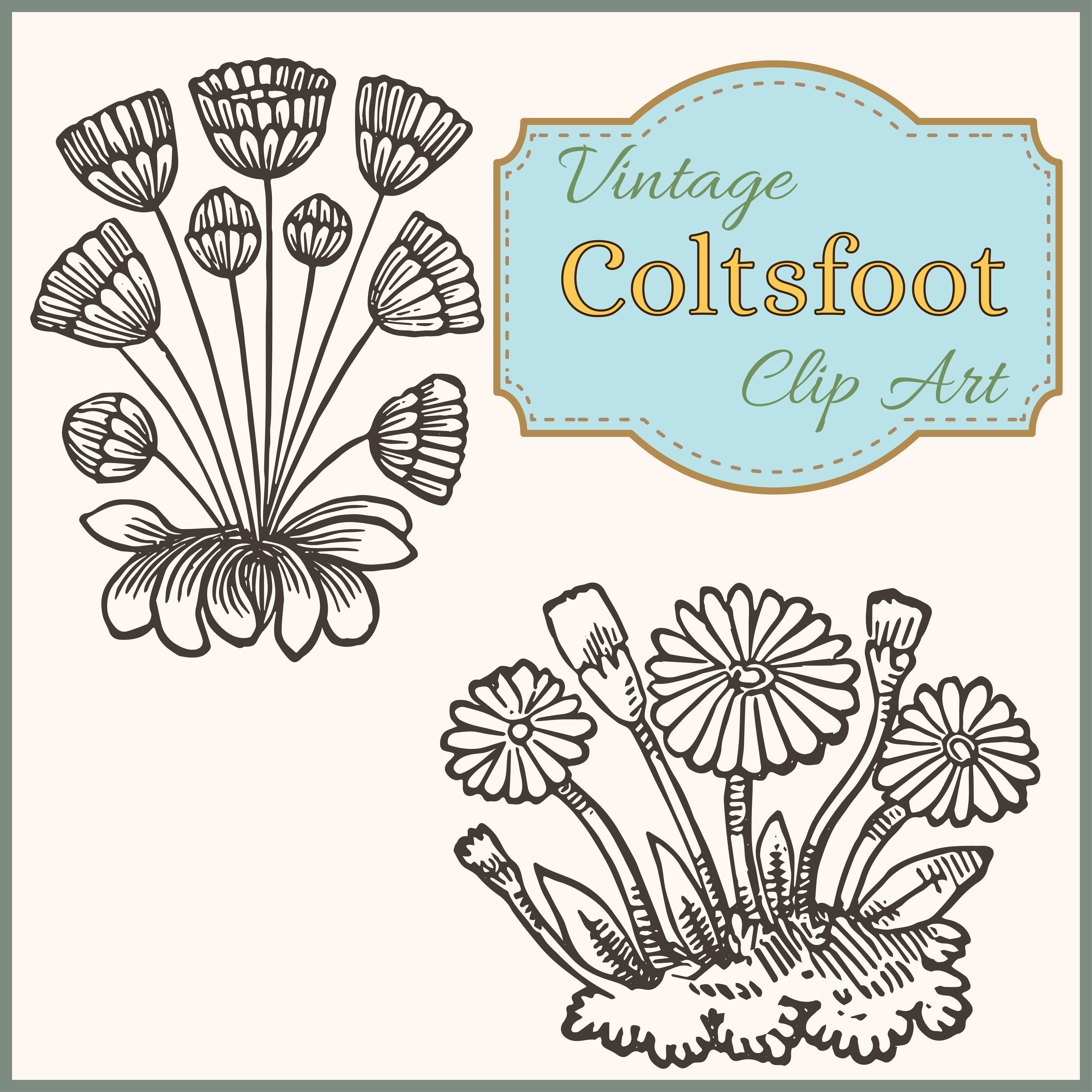 Vintage Coltsfoot Spring Garden Clip Art.