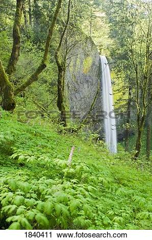 Stock Photography of Latourell Falls, Columbia River Gorge, Oregon.