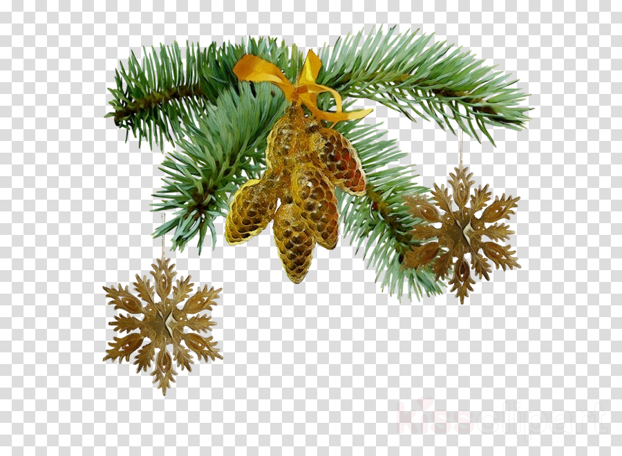 columbian spruce sugar pine shortleaf black spruce yellow.