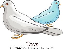 Columbidae Clip Art Illustrations. 15 columbidae clipart EPS.