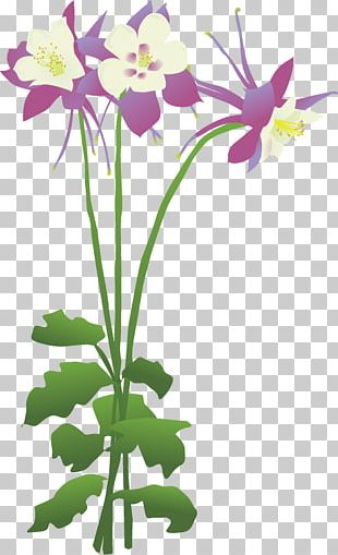 Columbine Flower PNG Images, Columbine Flower Clipart Free.