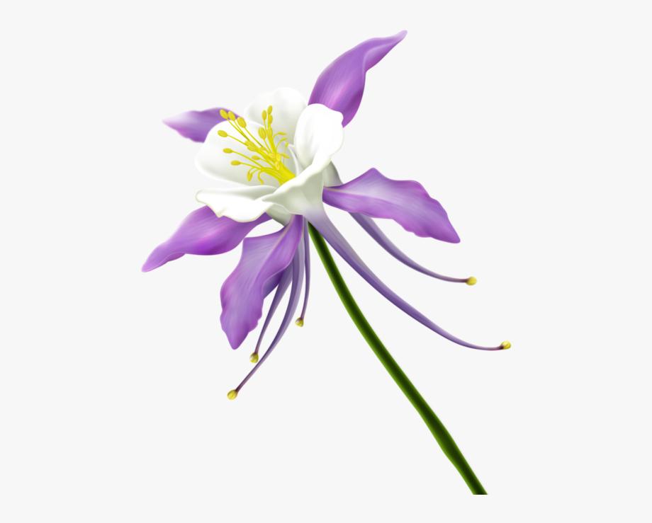 Fleurs Tube Flowers Png Kwiaty Pinterest.