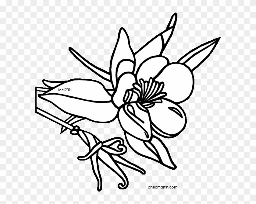 Colorado State Flower Drawing.