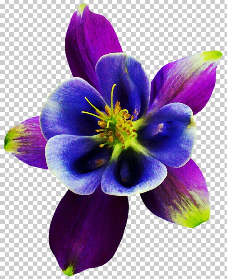 Herbaceous Plant PNG, Clipart, Columbine, Flower, Flowering.