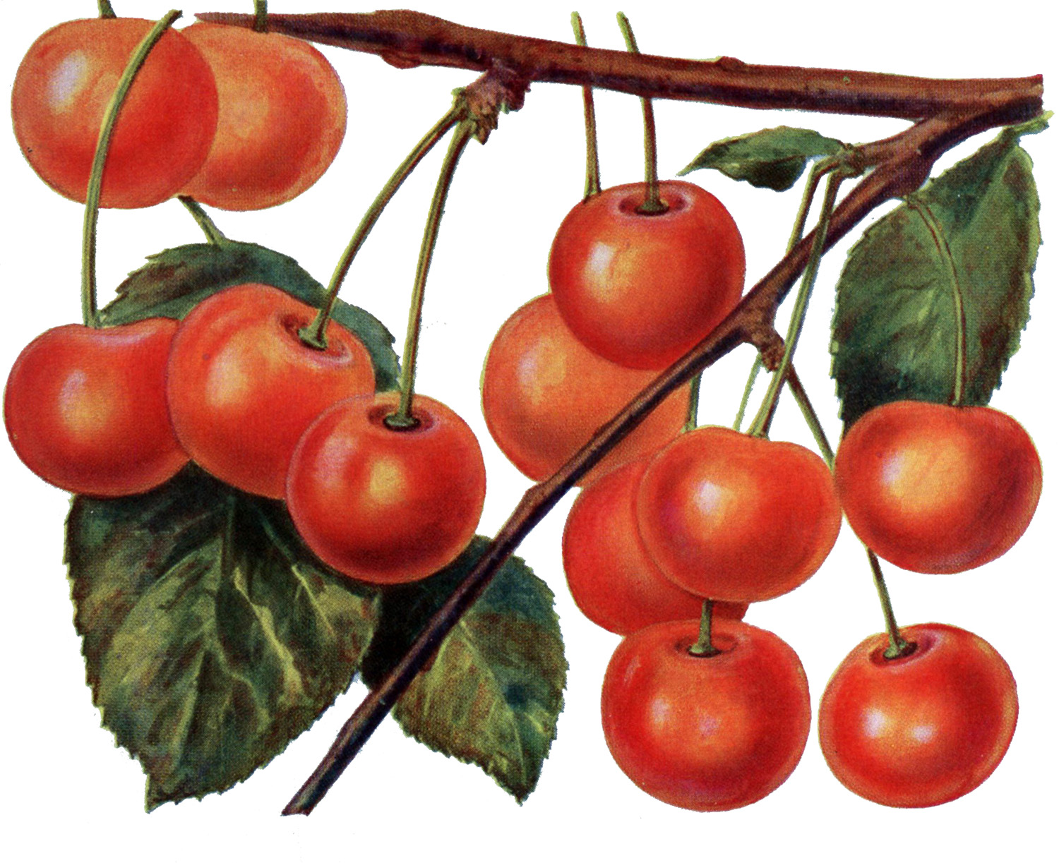Column fruit clipart #5