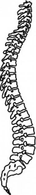 Columna vertebral de gran clip art.