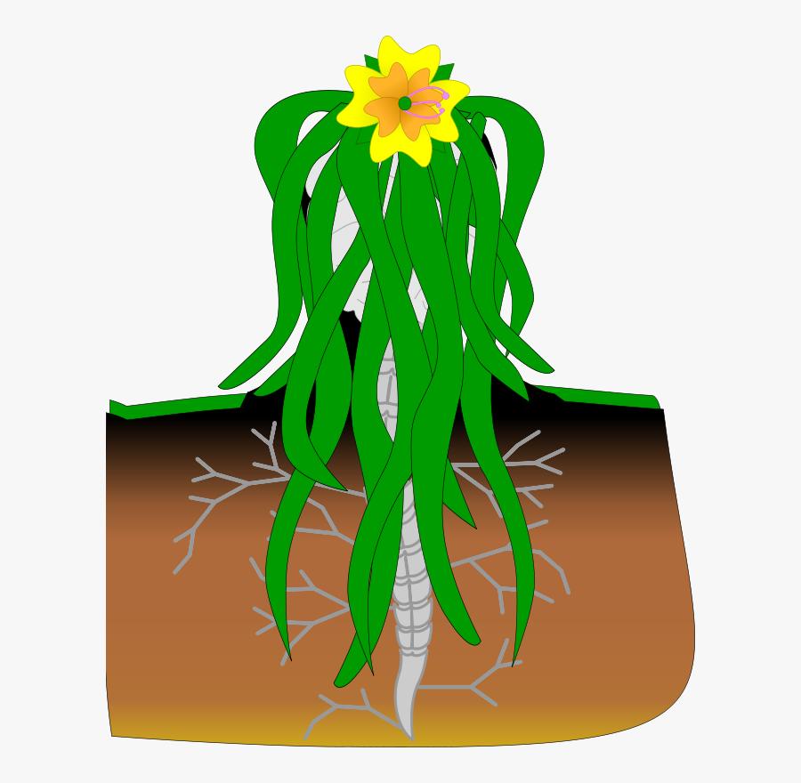 Plant,flora,leaf.