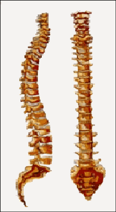 Curvaturas de la columna vertebral.