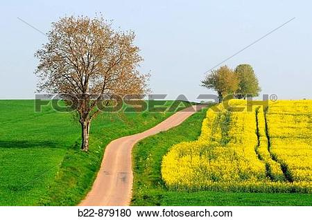 Stock Photography of Colza fields, Nievre, Burgundy, France. b22.
