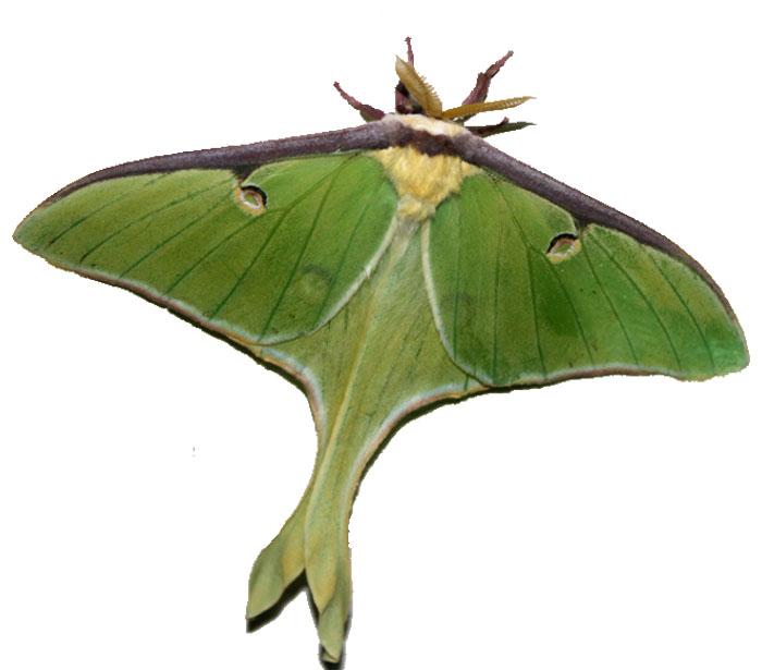 Giving Mirth: I heart moths..