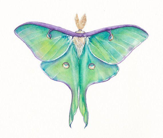 1000+ ideas about Luna Moth Tattoo on Pinterest.