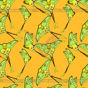 Seamless pattern Butterfly Madagascar comet moth.
