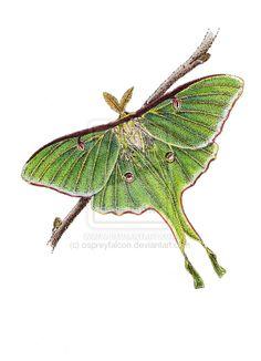 Luna moth tattoo.