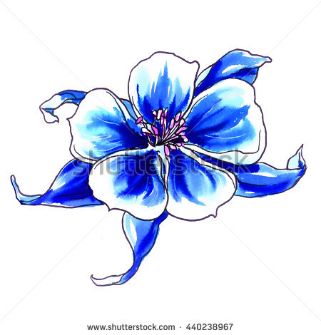 Blue Columbine Stock Photos, Royalty.