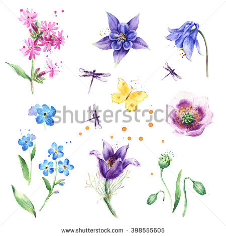Columbines Stock Photos, Royalty.