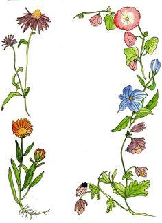 Bloemenweide #ECOstyle #illustratie #tekening #bloemen #vlinders.