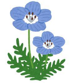 cornus japonica florida.