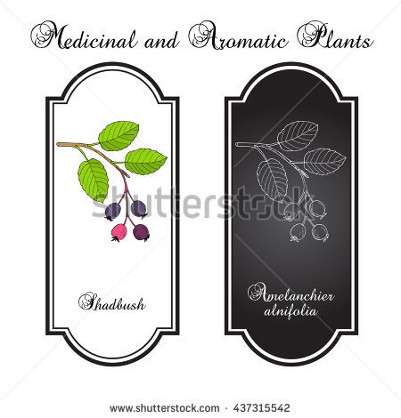 Juneberry Stock Vectors & Vector Clip Art.