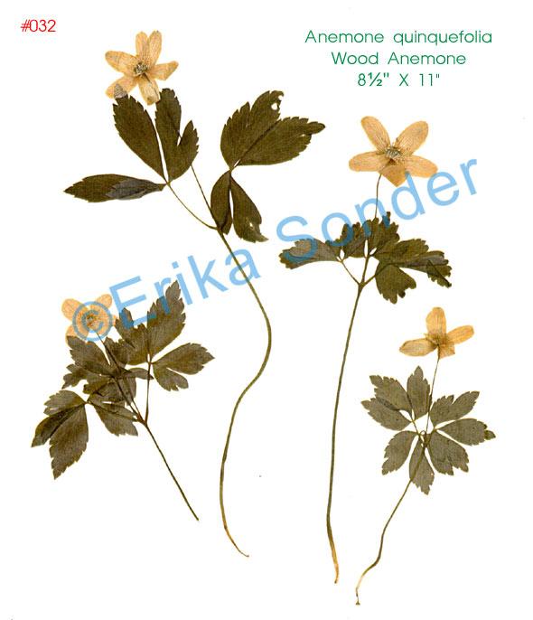 Erika Sonder's Portable Herbarium Plant Catalog.