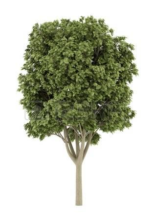 4,500 Cutout Trees Cliparts, Stock Vector And Royalty Free Cutout.